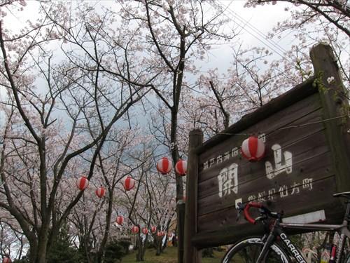 開山 桜祭り