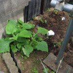 家庭菜園整理と草刈