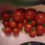 プチトマトの定義って?